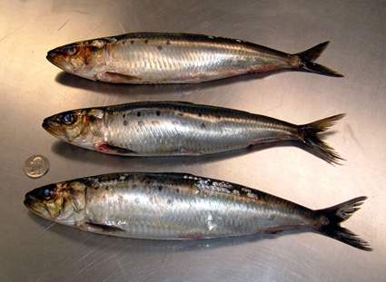 Sardines Fish oil can be more effective at reducing bad cholesterol than