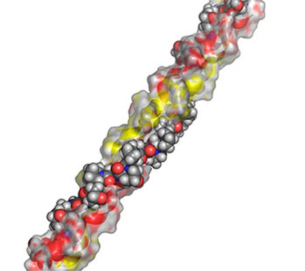 Triple-helical structure of collagen